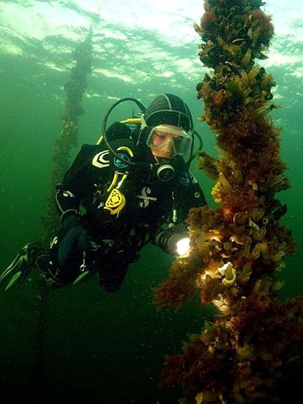 duiken in zeeland